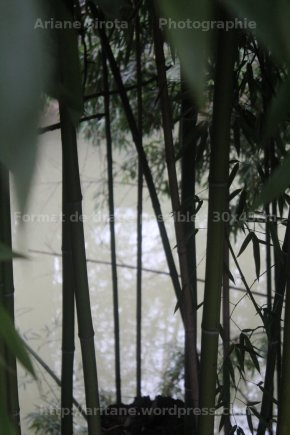 Bambouflet